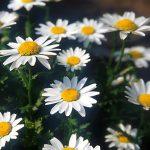 flower1-010